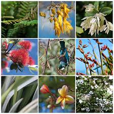 nz flowers photo print collage featuring new zealand tui kowhai pohutukawa flax on wall art flowers photography with nz flowers native new zealand flowers photo collage canvas wall