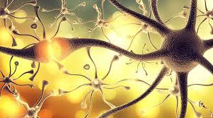 """Molécula de la """"madurez"""" promueve el crecimiento del cerebro en los  adolescentes"""