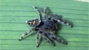 Michigan Spiders Can Be Scary But They Probably Wont Kill You