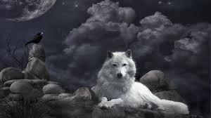 white wolf wallpaper 1920x1080. Simple White Intended White Wolf Wallpaper 1920x1080 I