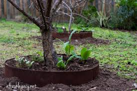 The Balearic Islands Branch Of The MGSUnderplanting Fruit Trees