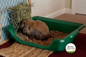 litter box set up for rabbits what