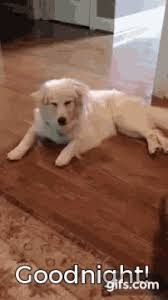 Animal puns goodnight Funny Dog Goodnight Gif Dog Goodnight Funny Gifs Tenor Good Night Dog Gifs Tenor
