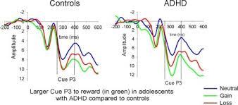 An Electrophysiological Investigation Of Reinforcement