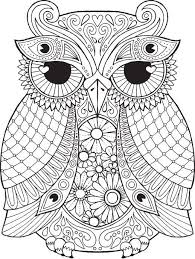 arnold owl colouring page