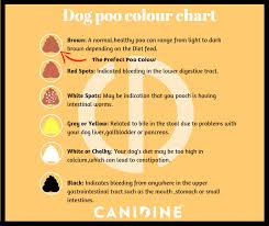 Poo Colour Chart Poo Color Chart Canidine Active Pet Active Family