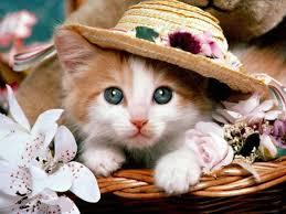 Resultado de imagem para gatinhos fofos
