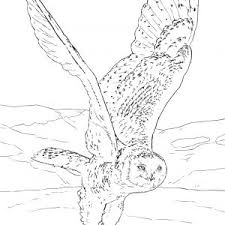 Small Picture adult snowy owl coloring page snowy owl coloring sheet coloring