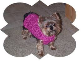 Free Knitted Dog Sweater Patterns Cool Free Knitting Patterns For Chihuahuas