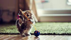 Gorgeous Cute Kitten Wallpapers For ...