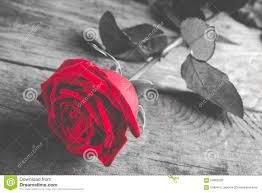 Legno Bianco Nero : Rosa rossa su legno in bianco e nero con il singolo fiore