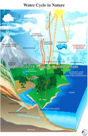 Water Cycle In Nature Buy Charts Educational Charts Photosynthesis Chart Product On Alibaba Com
