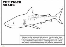 Small Picture Tiger Coloring Pages Printables Educationcom