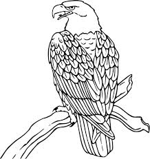 Small Picture 12 best Coloring Pages images on Pinterest Birds of prey Adult