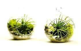 air plant terrarium diy mini hanging air plant terrarium set of 2 kit by inc diy