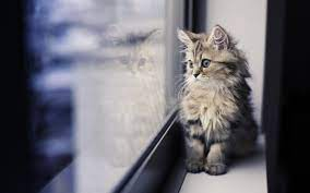 Desktop wallpaper download HD cat 49633 ...