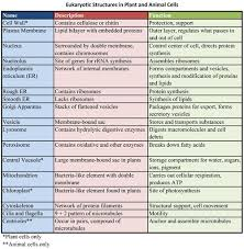 30 Correct Plant Cell Structures And Their Functions Chart