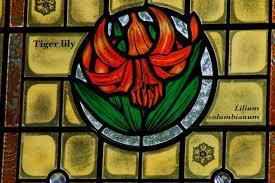 tiger lily of saskatchewan