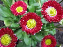 how to choose spring bedding plants for