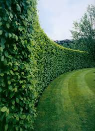 Small Picture Best 25 Hedges landscaping ideas only on Pinterest Hedges