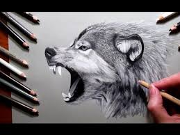 Drawn Wolf How To Draw A Wolf Pencil Drawing Jasmina Susak Speed Drawing Of