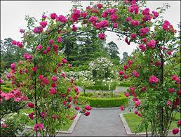 Small Picture Rose Garden Design Markcastroco
