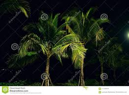 Palm Tree Night Light Coconut Palms In Night Lights Stock Photo Image Of Asian