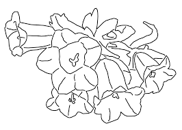 Coloriage Campanules