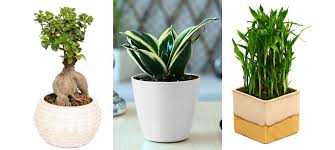 small plants for office. cool small desk plants 74 indoor for office plant nothing brightens up