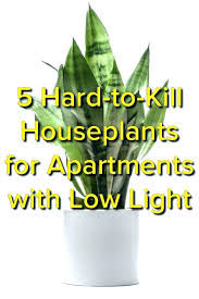 best low light plants office plants low light marvelous best houseplants images on gardens for apartments indoor plants low light light plants portable