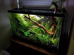 29 Gallon Tank Light My 29 Gallon Freshwater Planted Tank Plants Doing Great