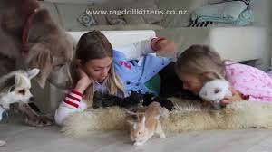 kittens and puppies and bunnies and hamsters. Perfect Hamsters YouTube Premium Throughout Kittens And Puppies Bunnies Hamsters T
