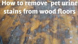 how to remove pet urine water damage stains from wood floors
