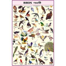 Birds Chart With Names In English Birds Chart 50x75cm