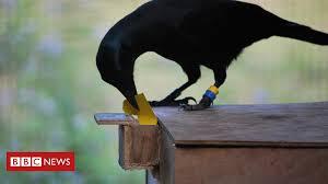 Crow Vending Machine Plans Delectable Crow Vending Machine Skills 'redefine Intelligence' Capmocracy