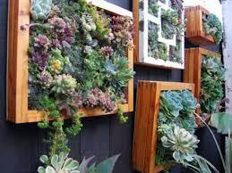 how to grow a vertical succulent garden