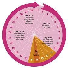 Period Cycle Pregnancy Chart Pin On Hormones
