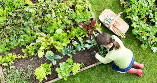 own raised bed vegetable garden