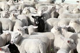 Black sheep and <b>white lies</b> (Idioms with colours, part 2) – About Words