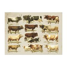 Cattle Chart Awesome Vintage Farmhouse Colored Cattle Chart Canvas Print