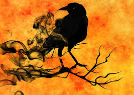 Image result for raven pictures images