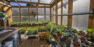vista gardens has its own seed shed where gardeners nurture organic seedlings into strong sprouts before being transplanted into the ground