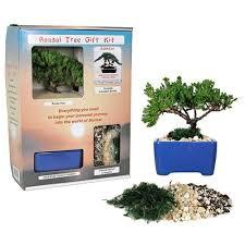 bonsai tree starter kit in gift box