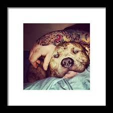 Tattoos And Pitbulls #handtattoo Framed Print by Dustin Gregory