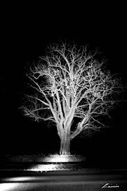 night tree 6024 light painting
