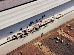 Image result for Termites