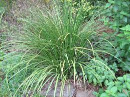 garden nurseries near me. Help Me Identify This Plant Flower Iris Growing Grass Garden Nurseries Near