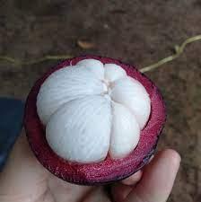 มังคุดเมืองจันท์ ราชินีผลไม้ไทย - Home