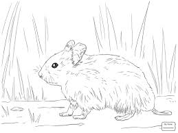 Cute Hamster Coloring Pages Printable Coloring Page For Kids