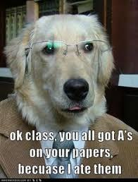 My dog on Pinterest | Golden Retrievers, Meme and Dogs via Relatably.com